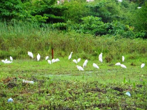weather in belize today is west, but at least the birds are happy.