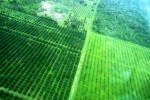 tropic air flight to belmopan