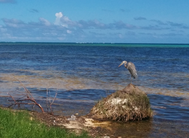 beach front property ambergris caye