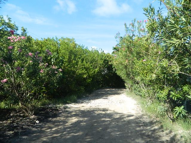 road north ambergris