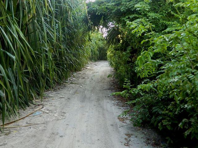 roads north ambergris
