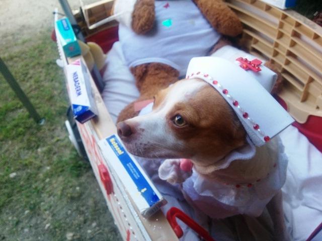 best halloween pet party belize
