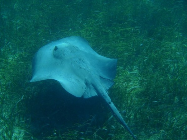 Shark Ray Alley