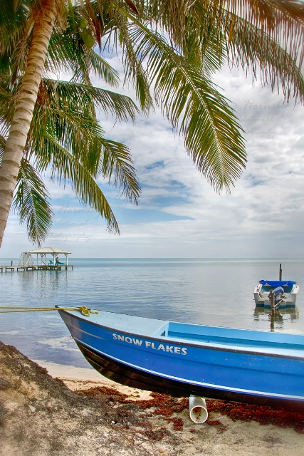 Snow flakes Caye Caulker Belize Ric Hornsby