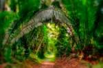 Cockscomb Basin Nature Preserve Belize