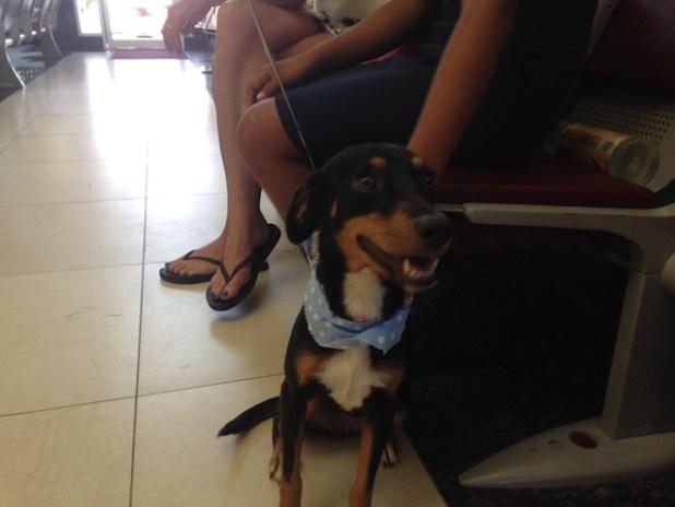 Humane Society Belize