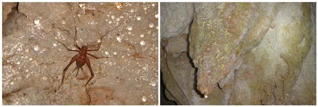 Caves Branch Belmopan Belize