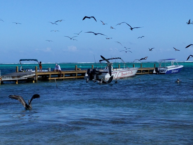 Frigates, pelicans and rays were all waiting for scraps