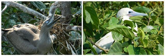 Bird Sanctuary Belize