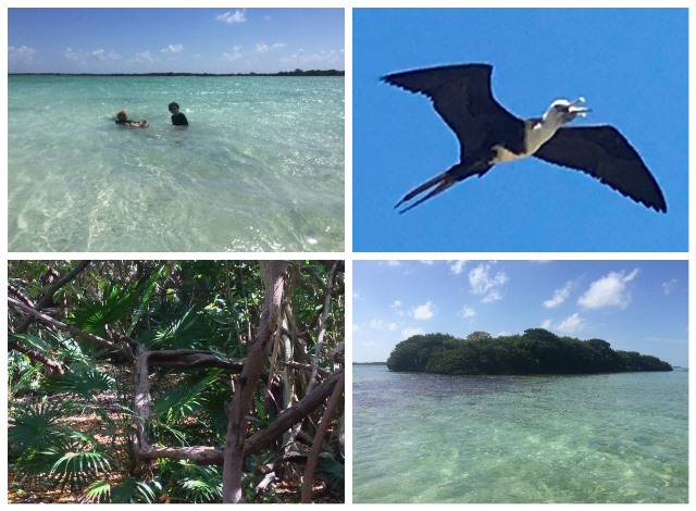 Half Day Bird Watching Boat Tour Ambergris Caye Belize