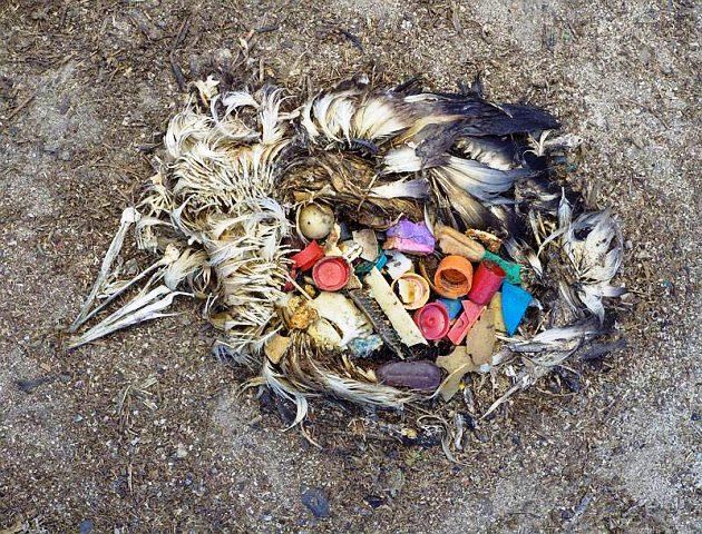 Dead bird on Ambergris Caye Belize Beach