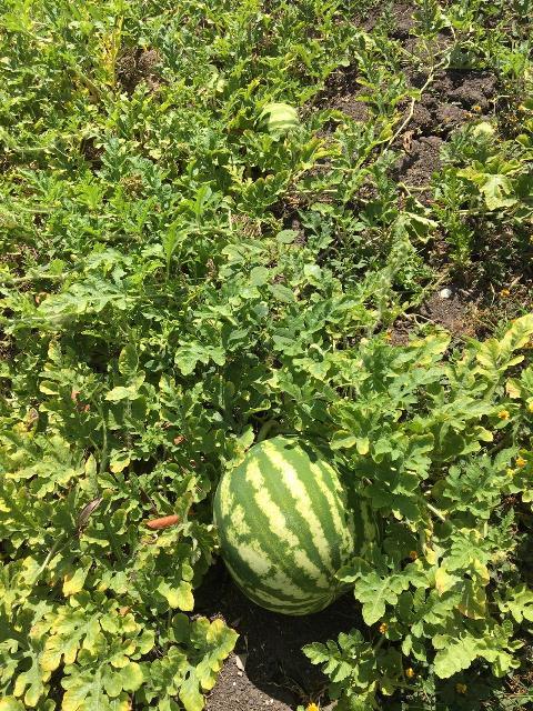 Kunahmul Organics Farm Mainland Belize