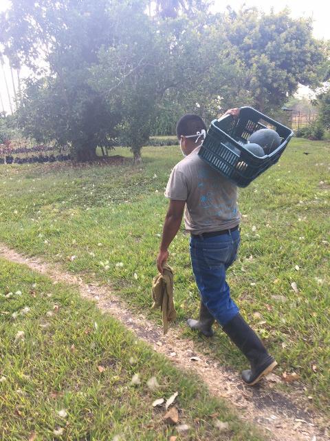 Kunahmul Organic Farm Belize