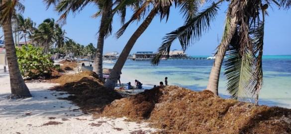 Sargasso beach Belize