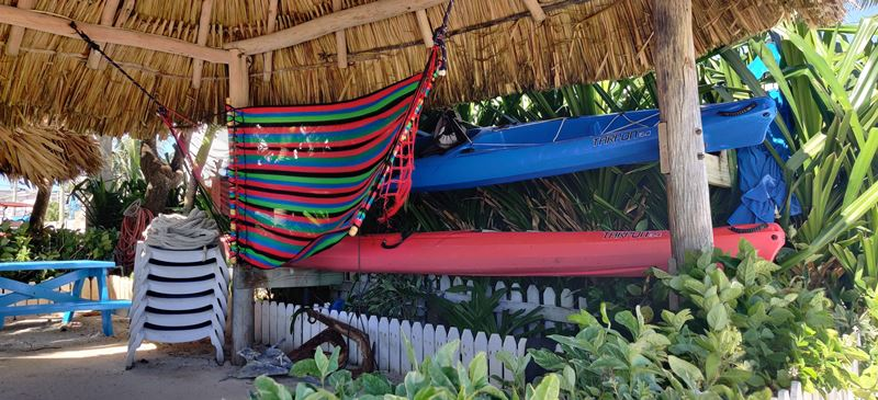 thatched roof palapa blue tang inn