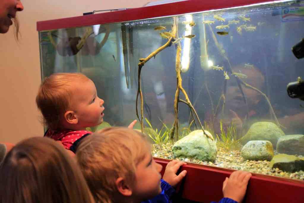 kids looking at fish in tank