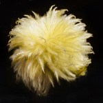 Fluffball-Not for comment-Kristina Allums
