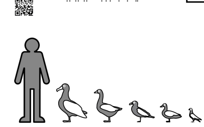 Păsări comparativ