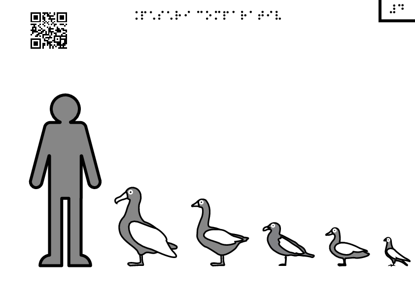 Birds by comparison