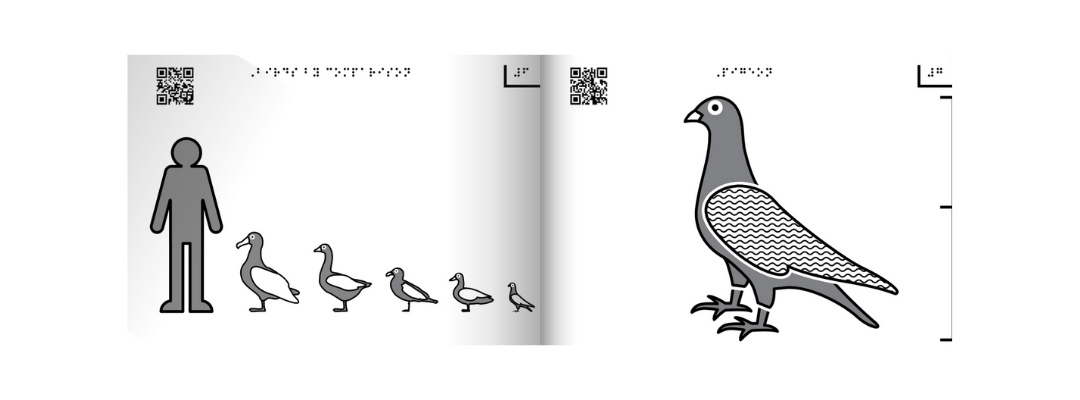 tactile graphics of birds