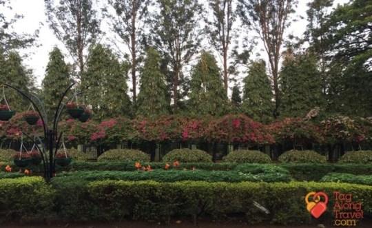 Bangalore Running & Walking Tours-Lalbagh Gardens Grounds