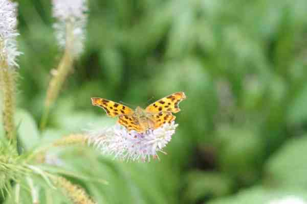 Schmetterling-Mamamulle-Spenden