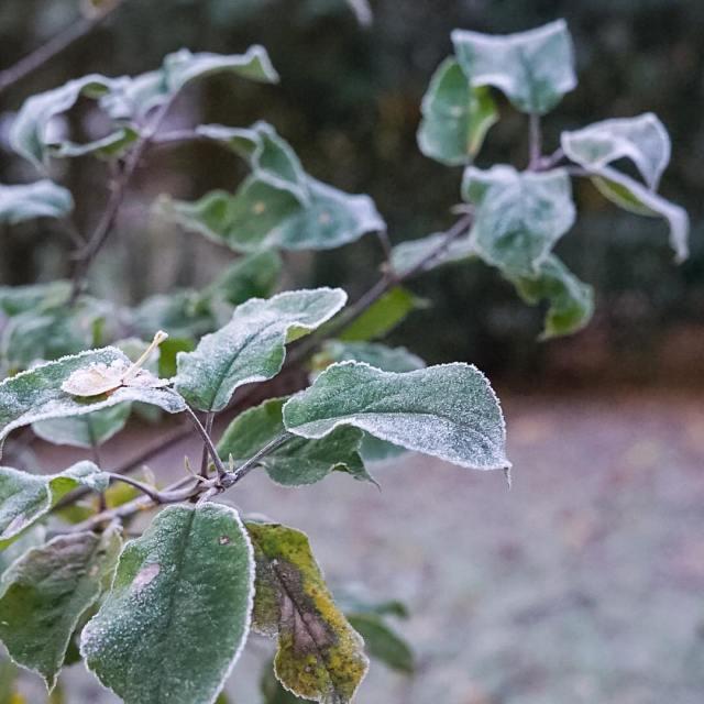 Rauhreif Alles ist Blte geworden Frostblte Nebelgedicht Mit glsernen Zweigenhellip
