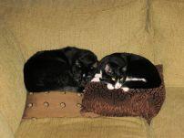 Trixie and Oscar as nap buddies