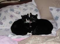 Felix and Oscar on the bed