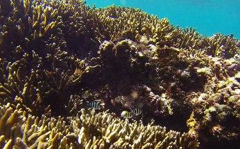 Tagulandang Island (North Sulawesi). Snorkeling in Bulangan Beach.