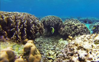 Tagulandang Island. Snorkeling in Bulangan.