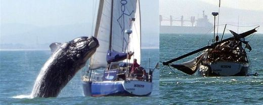 Whale breaches on top of sailboat, followed by aftermath