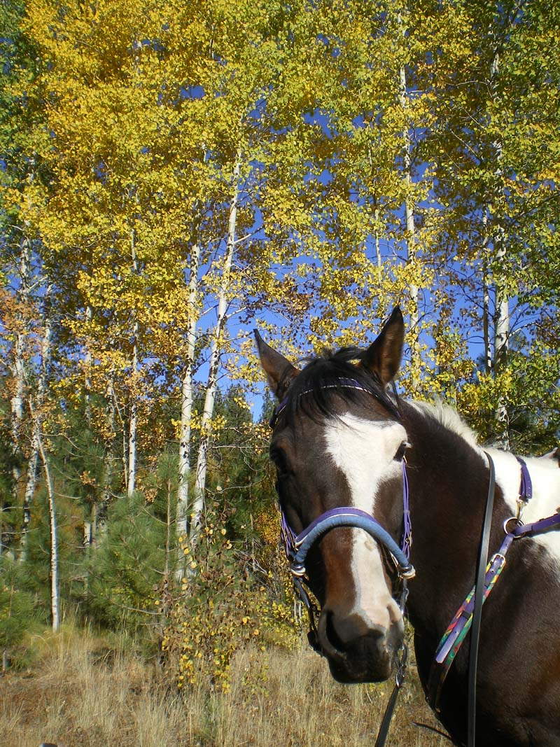 Bandit in Fall Colors