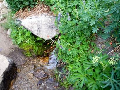 Spring Crossing Trail