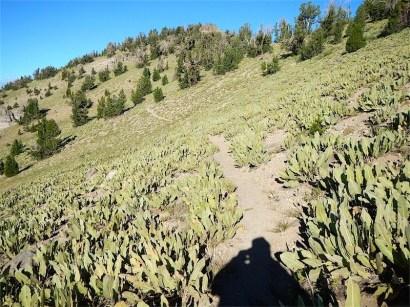 Mule's Ears Meadow to Mt. Baldy