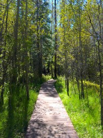 Spooner Lake Trail, south side with Aspen lining the catwalk
