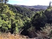 Dipsea at Panoramic Highway