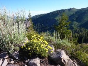 33-Wildflowers and Mountain Range