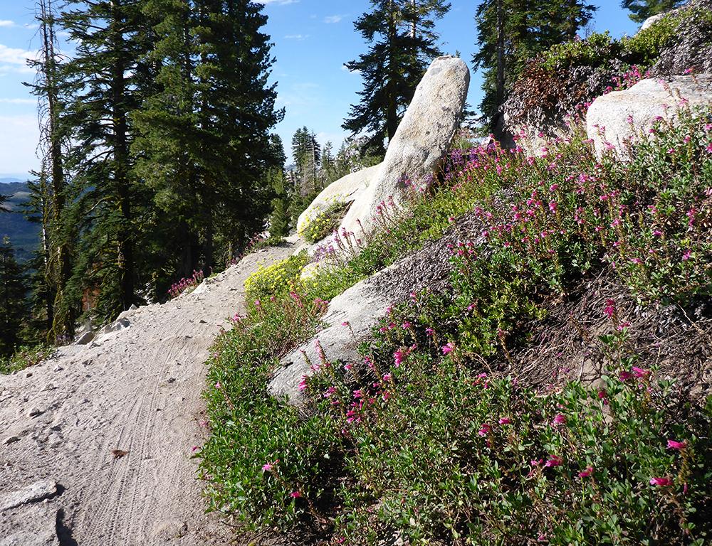 41-Mountain Bike Tread Patterns on the Tahoe Rim Trail