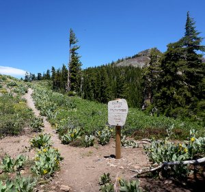 23 - Intersection of the TRT/PCT at the Border of Granite Chief Wilderness