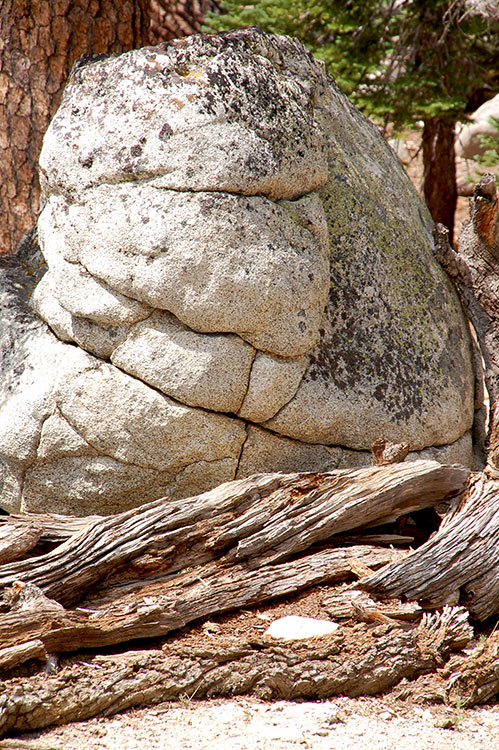 65 - Granite Boulder Cradled by a Fallen Tree