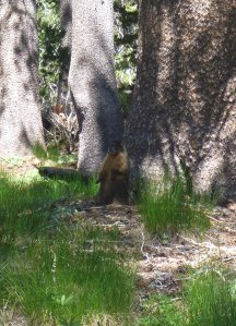 8 - Curios Marmot People-Watching Near His Hidey Hole