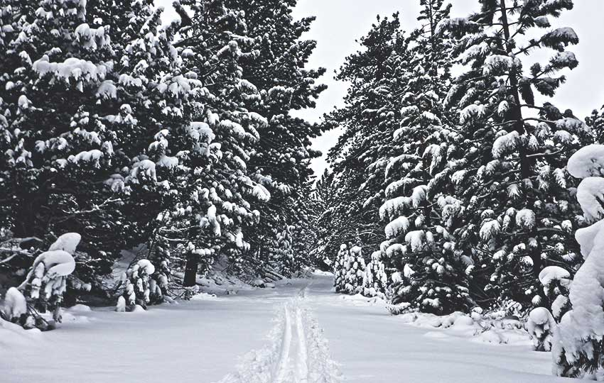 5 Reasons to Love Spring Cross-Country Skiing