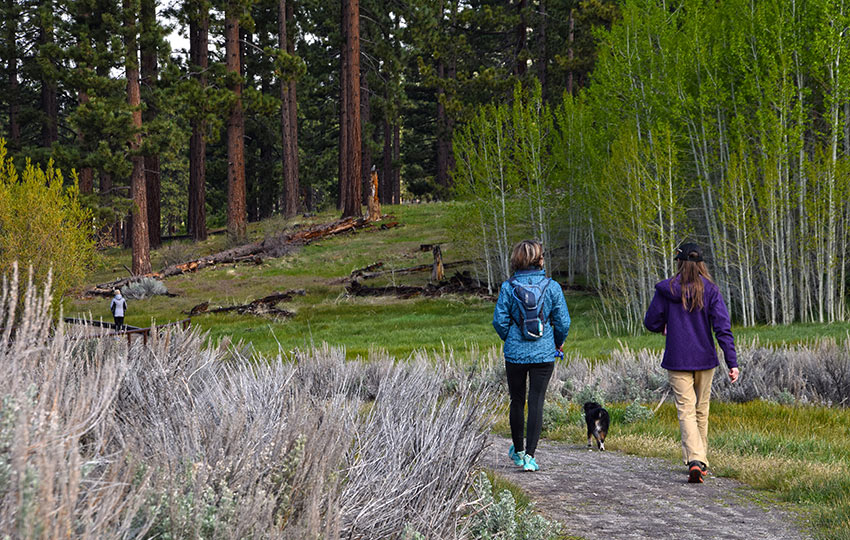 Hikers on the Lam Watah Historic Trail with a grove of Aspen trees and Jeffrey Pines