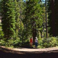 Hiking Meeks Creek Falls (via SR 89 at Meeks Creek in West Tahoe)