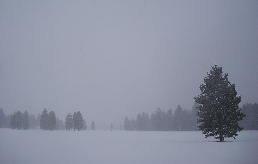 A snowy meadow with trees and overcast skies