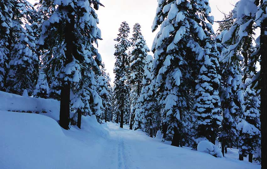 Cross-country skiing through snow-flocked forest