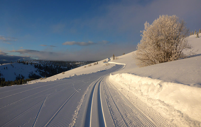 Groomed cross-country trails in the morning light