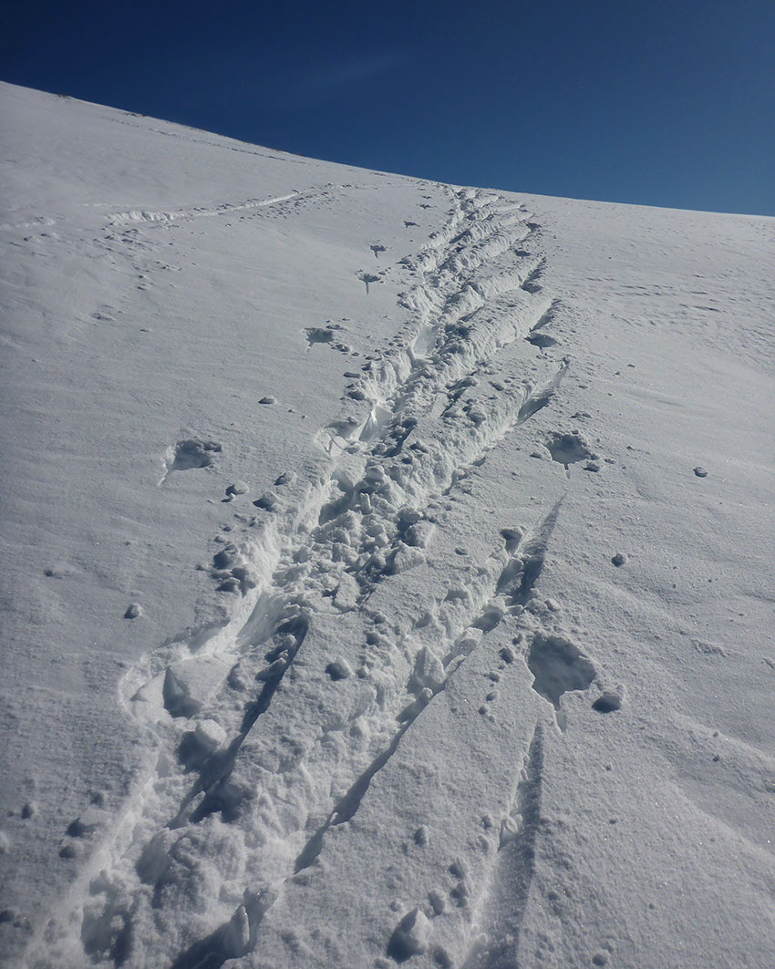 Half-herringbone pattern left in the snow while cross-country skiing