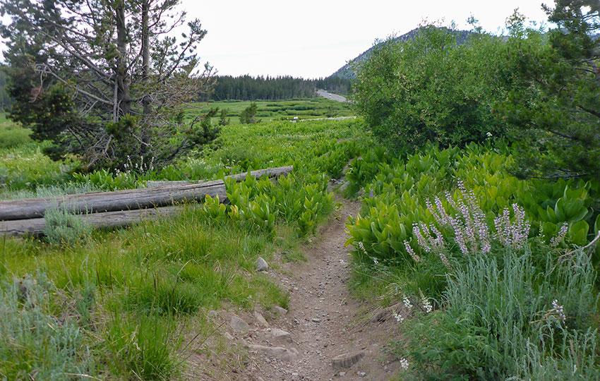 Hiking trail through lush grasses and bushes